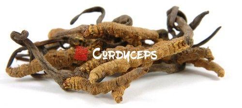 Кордицепс - цілющий гриб з китаю