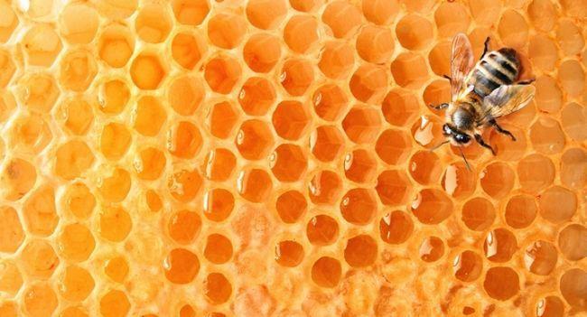 Маски для волосся з медом
