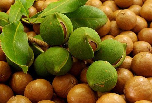 Застосування масла макадамії для особи в домашніх умовах