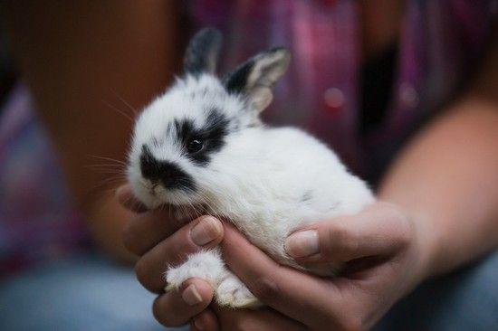 Тривалість життя декоративних кроликів: ключові чинники догляду