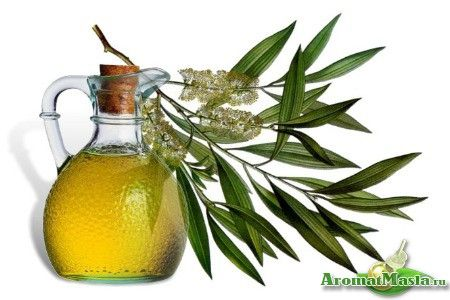 Продукт, здатний замінити багато лікарських препаратів: опис масла чайного дерева