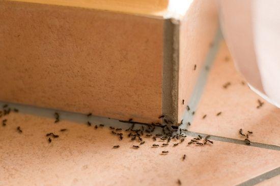 Засіб від мурах у квартирі: виганяємо непрошених гостей народними і хімічними способами