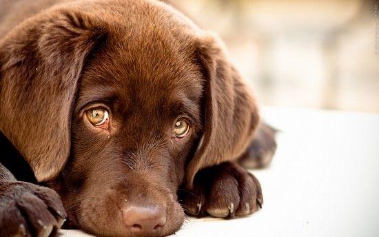 Таблетки від глистів для собак: огляд глистогінних засобів і правила їх використання