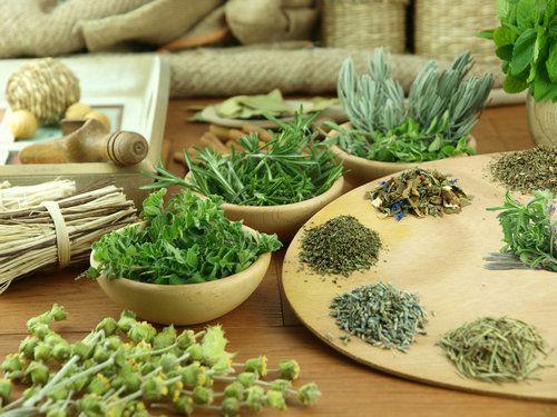 Трави для зниження апетиту - рецепти природи для схуднення